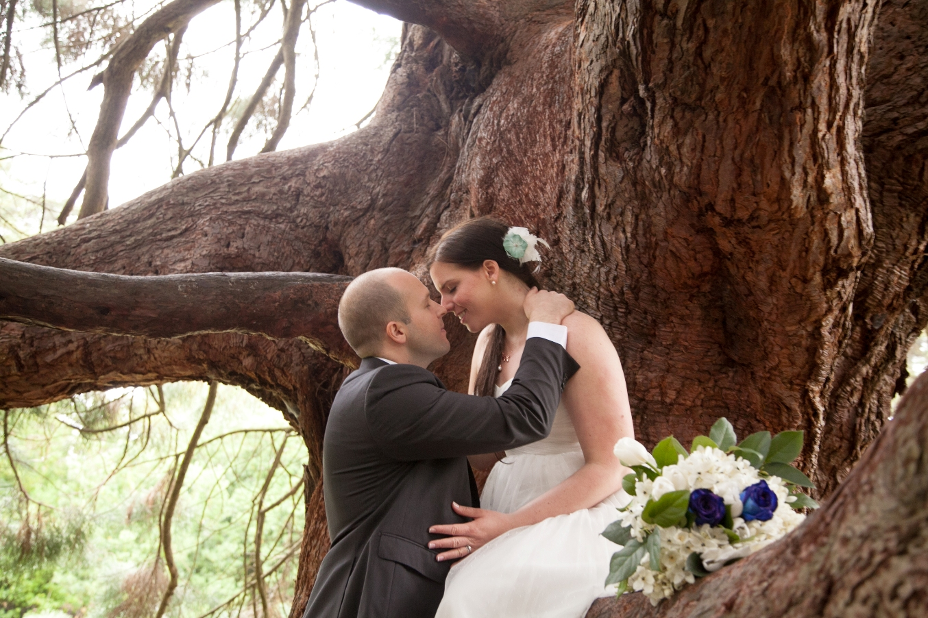 married-san-francisco-redwoods