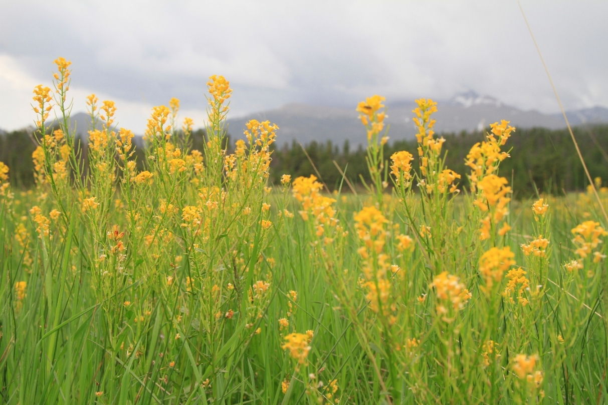 married-meadow-rocky-mountain-national-park