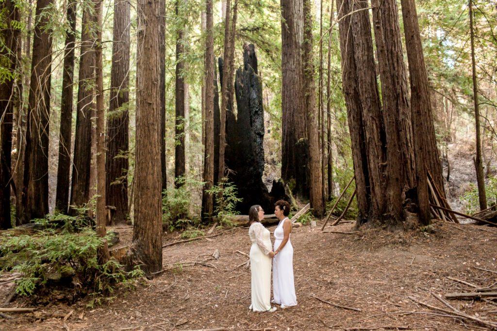 redwood elopement in Santa Cruz
